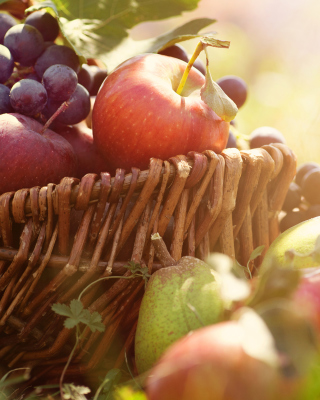 Apples and Grapes Wallpaper for Nokia Asha 300