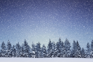 Winter Forest Background for Android, iPhone and iPad