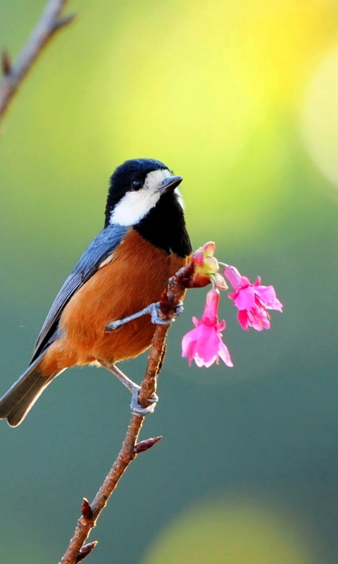 Beautiful Bird wallpaper 480x800