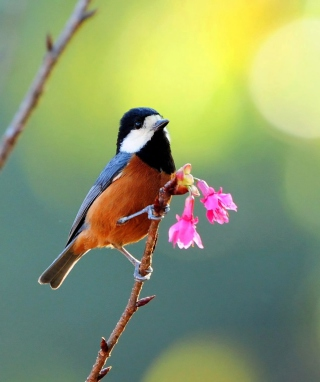 Free Beautiful Bird Picture for 480x800