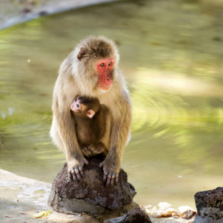 Feeding monkeys in Phuket - Fondos de pantalla gratis para iPad Air