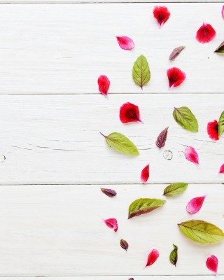 Leaves and white background - Fondos de pantalla gratis para 320x480