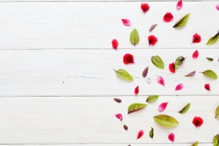 Leaves and white background - Fondos de pantalla gratis