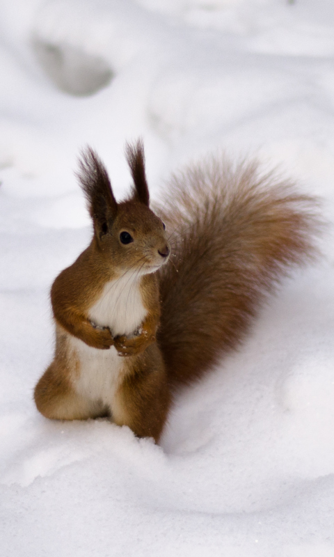 Screenshot №1 pro téma Funny Squirrel On Snow 480x800