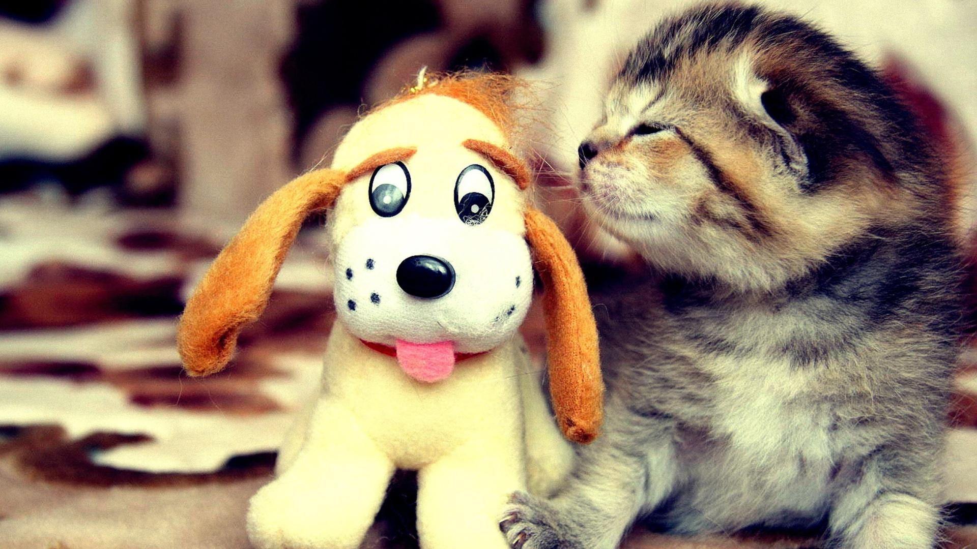 Top 10 kitten toys
