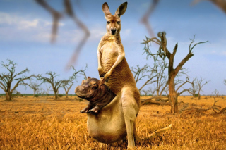 Kangaroo With Hippo Wallpaper for Android, iPhone and iPad