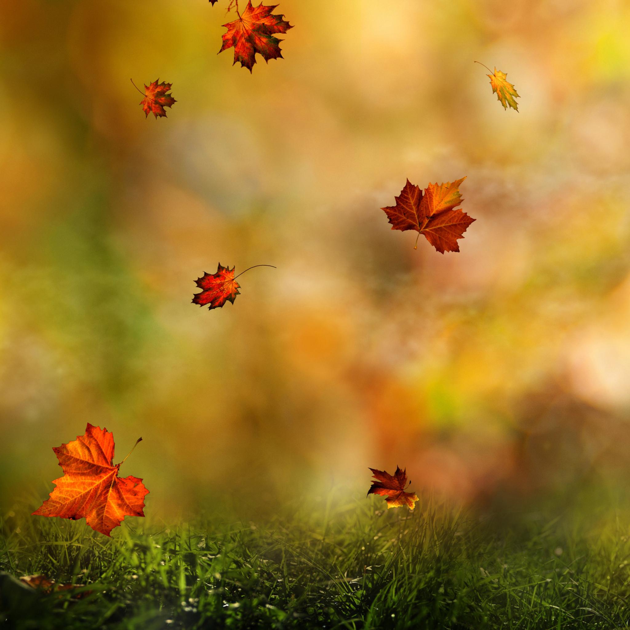 Осень картинки на телефон