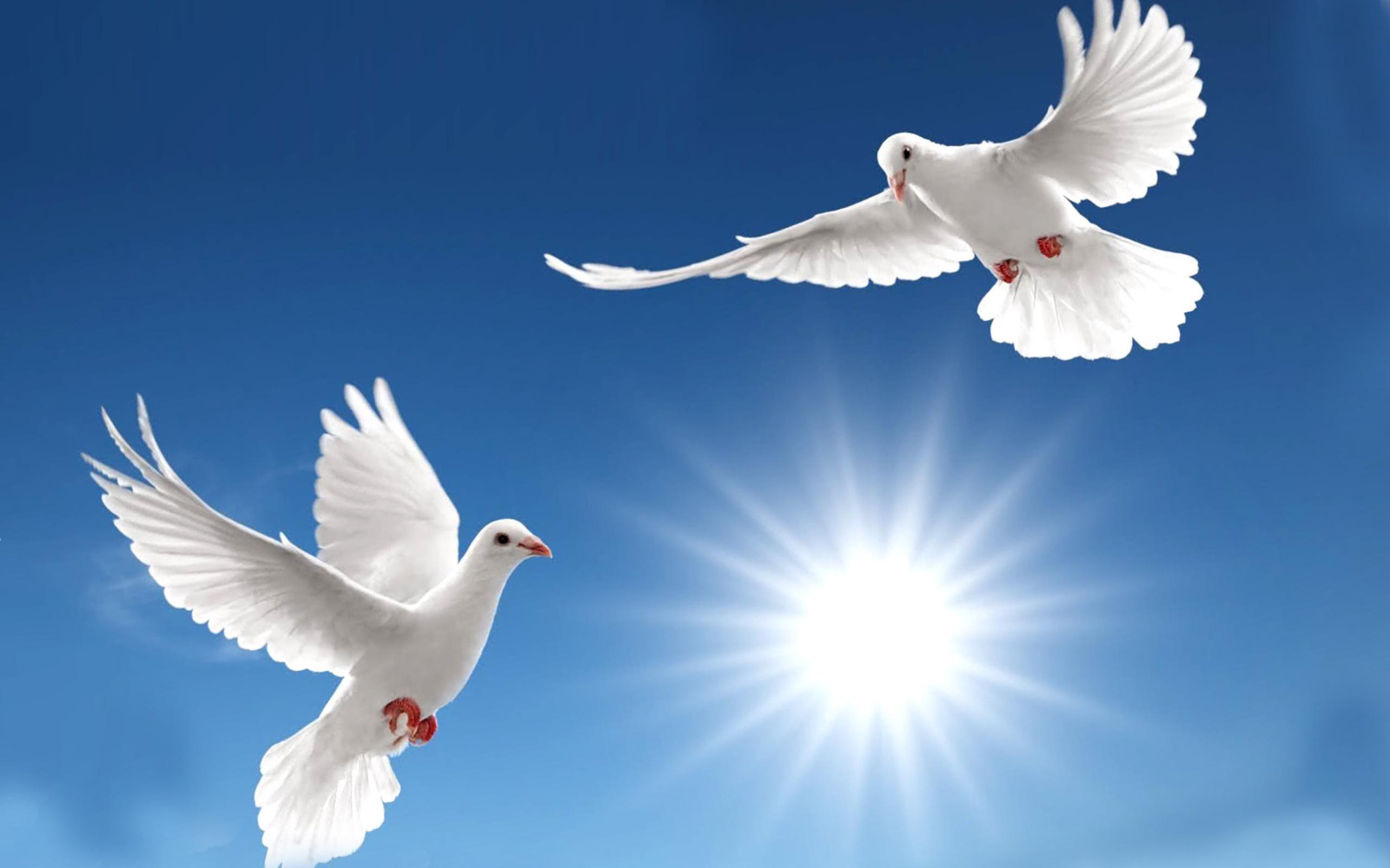 белые голуби фон без смс