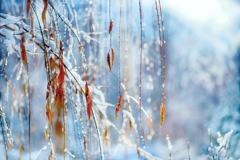 зима листья ветка природа скачать