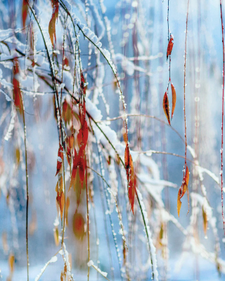 Macro Winter Photo sfondi gratuiti per iPhone 4S