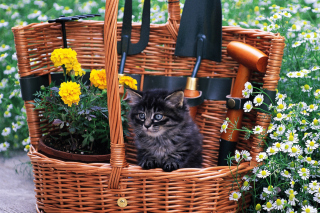 Обои Cute Black Kitten In Garden для Android 1200x1024