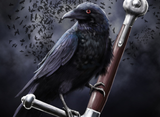 Black Crow Background for Android, iPhone and iPad