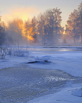 Frosty February Wallpaper for 320x480