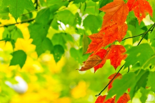 Autumn Leaves Background for Android, iPhone and iPad