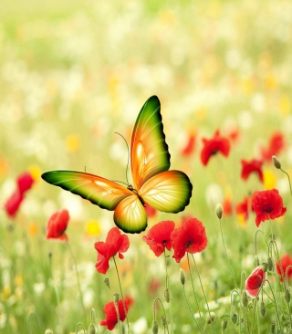 Butterfly Wallpaper for 240x320