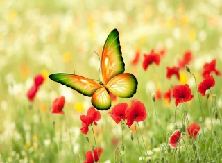 Butterfly Background for Android, iPhone and iPad