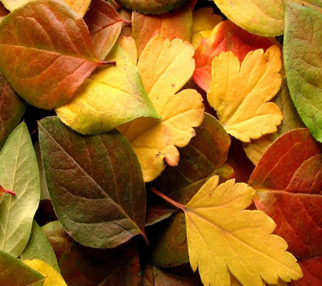 Dry Fall Leaves para Motorola RAZR XT910