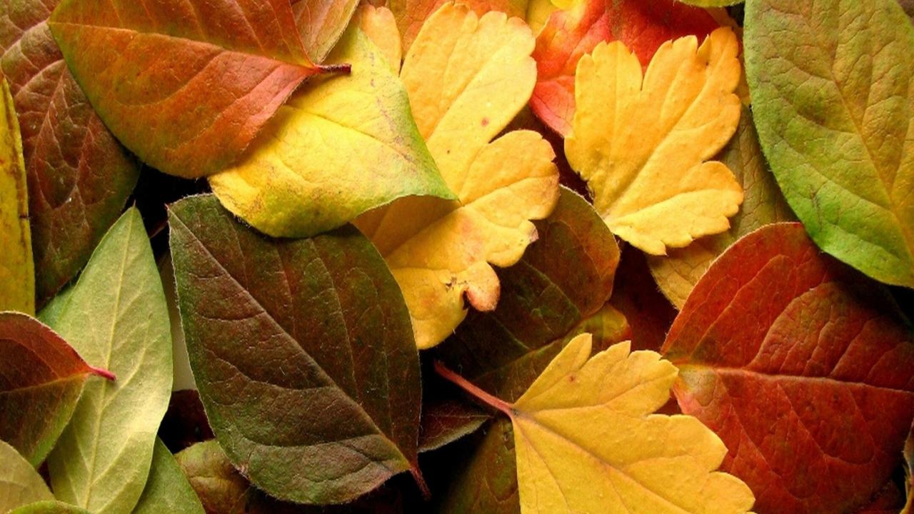 Dry Fall Leaves