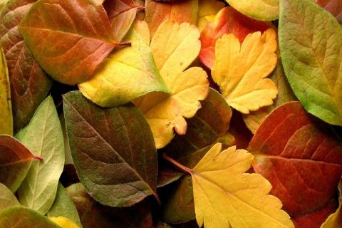 Dry Fall Leaves para LG E400 Optimus L3