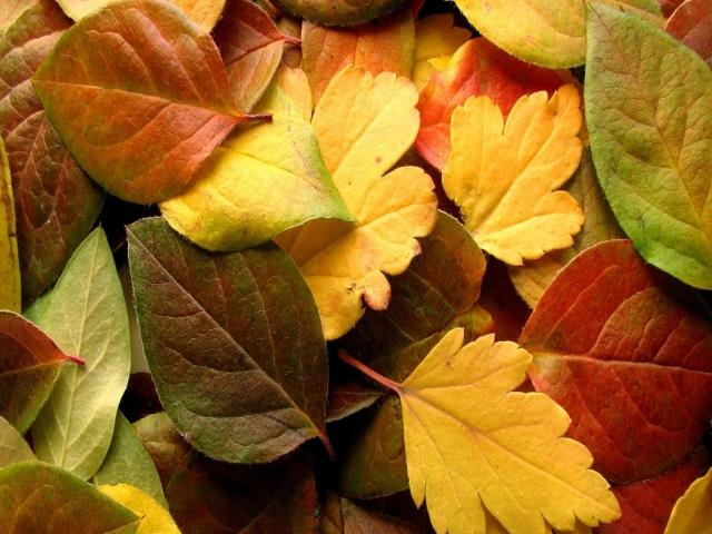 Dry Fall Leaves para Sony Ericsson XPERIA X8