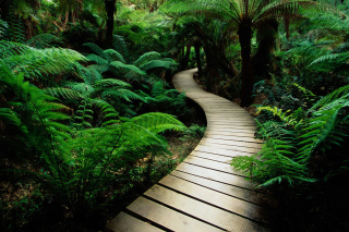 Jungle Path Background for Android, iPhone and iPad