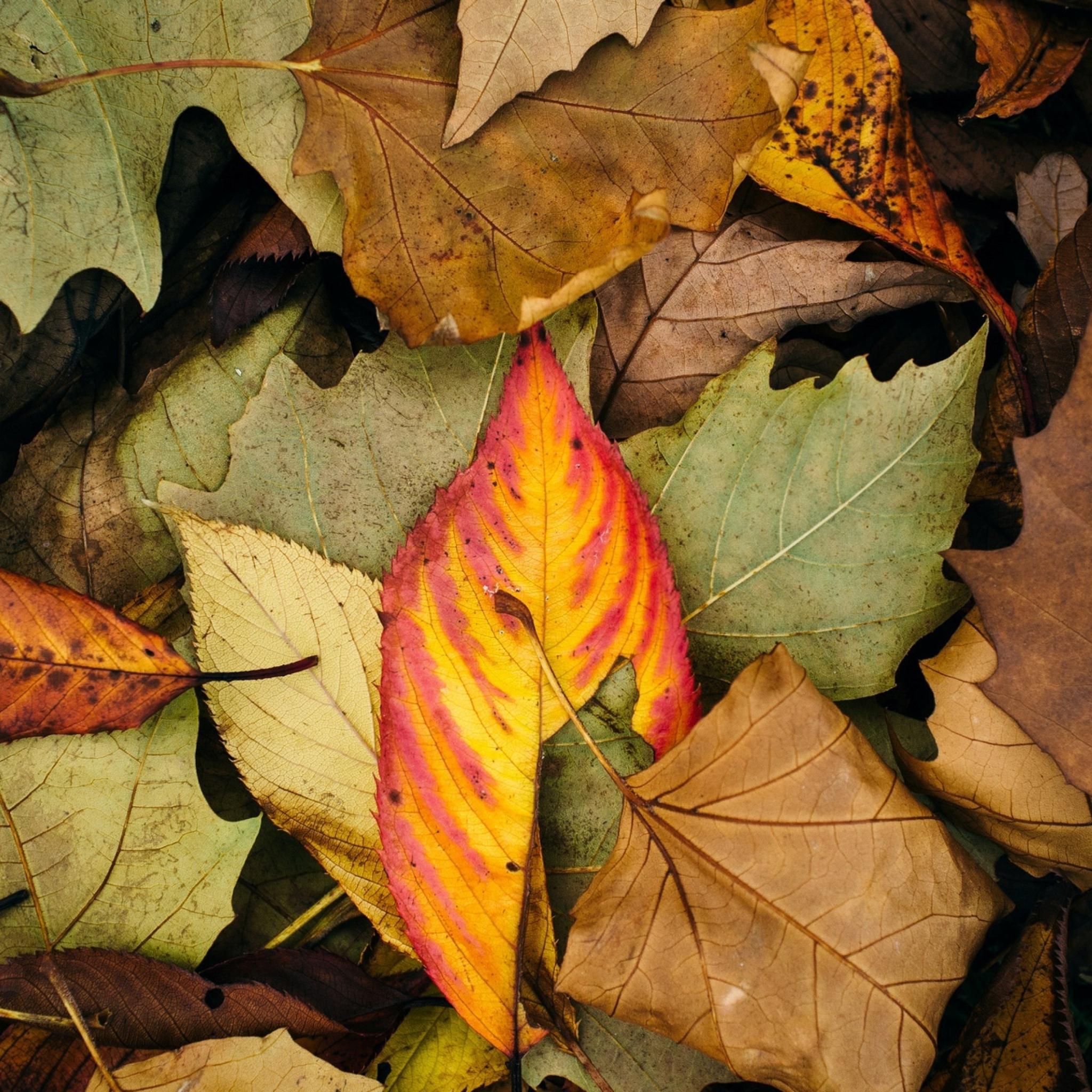 Обвисшие листья без смс