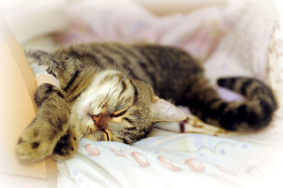 Free Cat Hibernation Picture for Android, iPhone and iPad