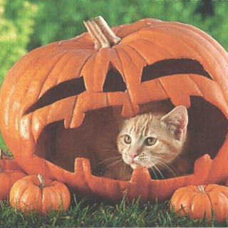 Free Pumpkin Cat Picture for iPad 3