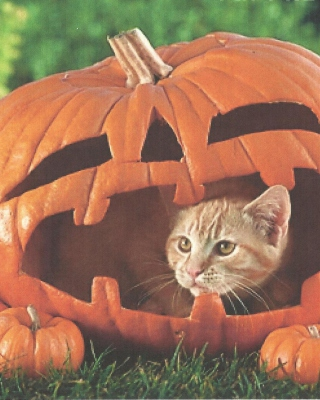 Free Pumpkin Cat Picture for 640x1136