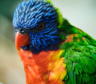 Colorful Parrot sfondi gratuiti per iPad mini