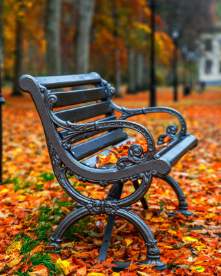 Autumn Park Wallpaper for Nokia Asha 311