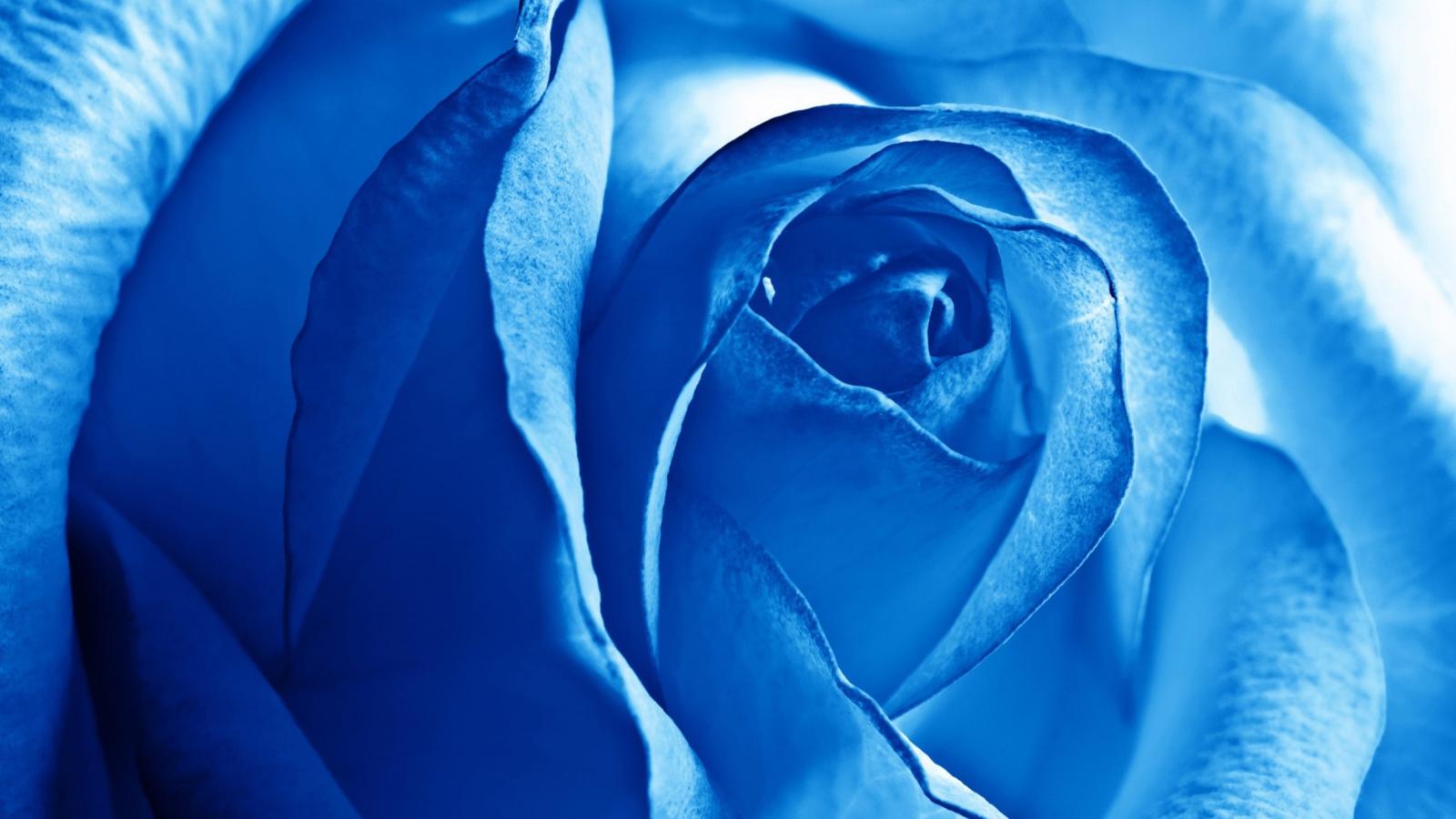 синий цвет фото картинки дозаторов