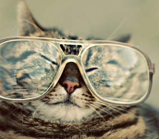 Обои Funny Cat With Glasses для телефона и на рабочий стол iPad mini