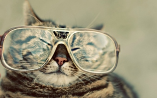 Funny Cat With Glasses Picture for Android, iPhone and iPad