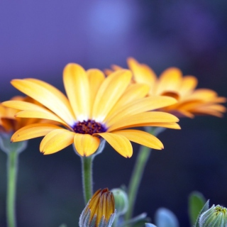Rudbeckia Flowers Wallpaper for iPad Air