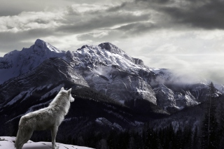 Kostenloses White Wolf In Mountains Wallpaper für Android, iPhone und iPad