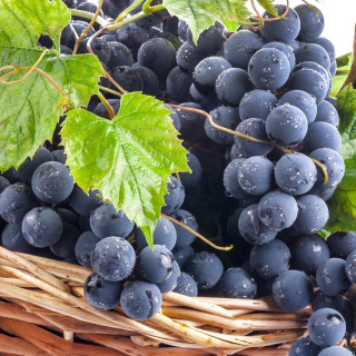 Blue Concord Grape - Fondos de pantalla gratis para 1024x1024