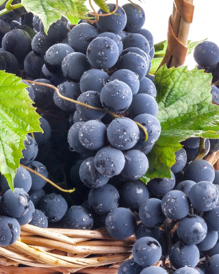 Blue Concord Grape Background for Nokia Asha 306