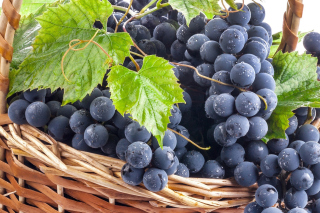 Free Blue Concord Grape Picture for Android, iPhone and iPad