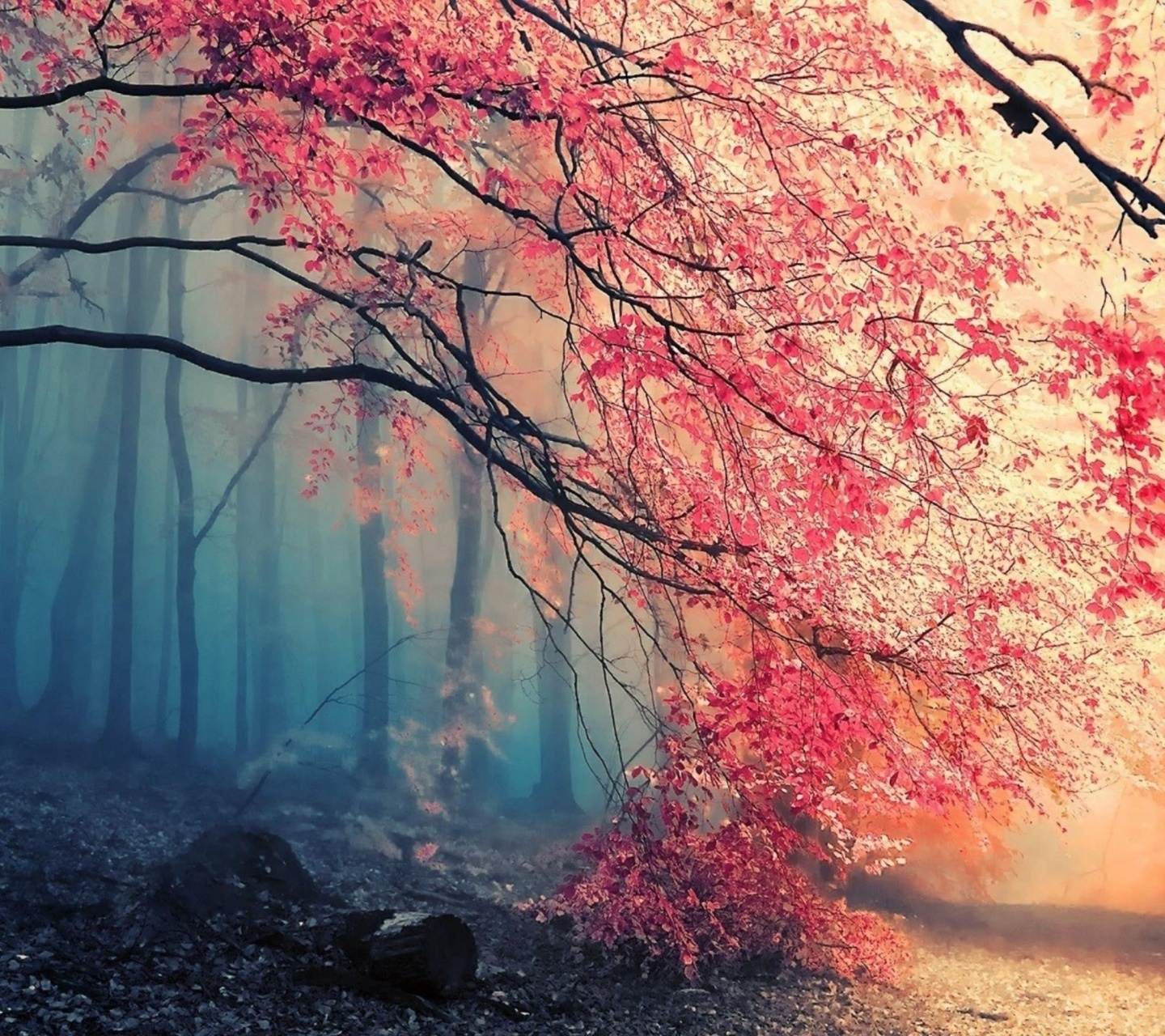 Screenshot №1 pro téma Misty Autumn Forest and Sun 1440x1280