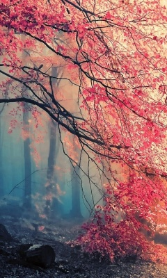 Screenshot №1 pro téma Misty Autumn Forest and Sun 240x400