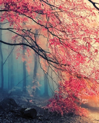 Kostenloses Misty Autumn Forest and Sun Wallpaper für 320x480