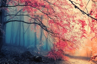 Free Misty Autumn Forest and Sun Picture for Motorola DROID 3