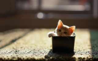 Little Kitten In Box Background for Android, iPhone and iPad