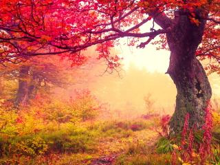 Autumn Forest para Nokia Asha 201