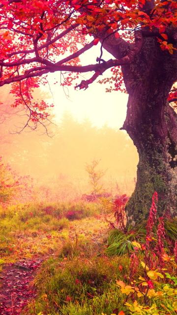 Autumn Forest para Nokia 5230