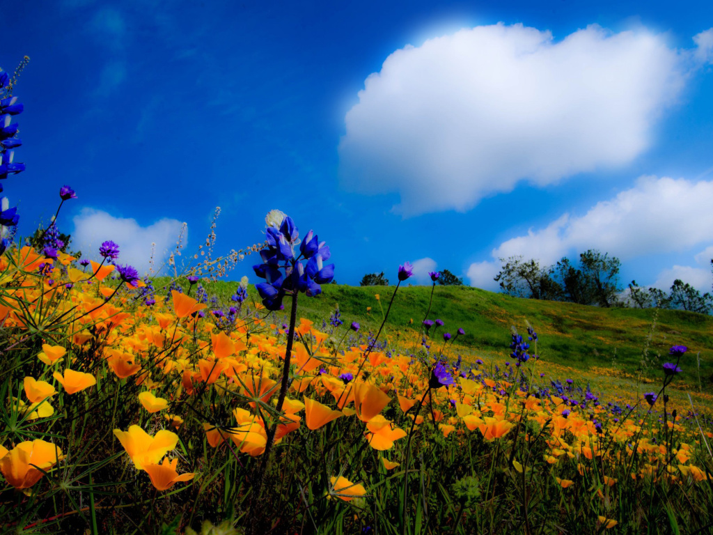 Screenshot №1 pro téma Yellow spring flowers in the mountains 1024x768