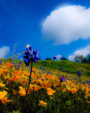 Screenshot №1 pro téma Yellow spring flowers in the mountains 128x160
