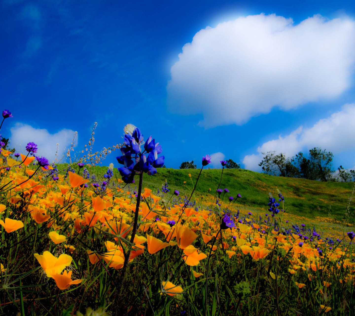 Screenshot №1 pro téma Yellow spring flowers in the mountains 1440x1280