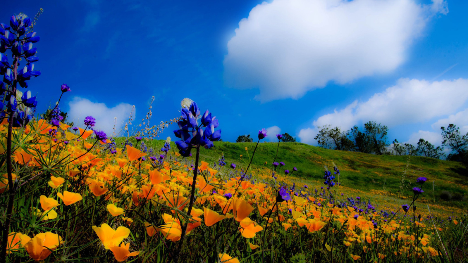 Screenshot №1 pro téma Yellow spring flowers in the mountains 1600x900